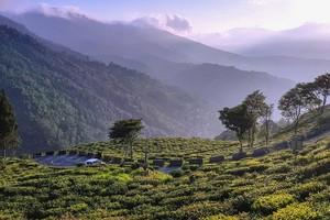 Darjeeling16768.jpg