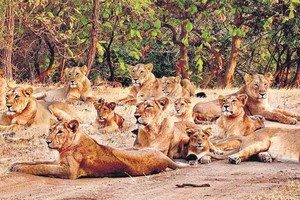 Gir National Park near Palitana Temples