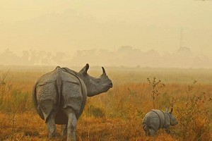 Kaziranga National Park near Bomdila