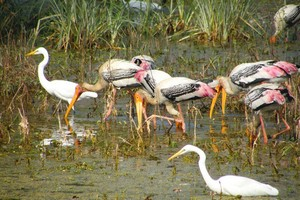 Keoladeo National Park, Bharatpur Bird Sanctuary, Bharatpur