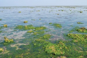 Marine National Park, Gulf of Kutch, Devbhumi Dwarka