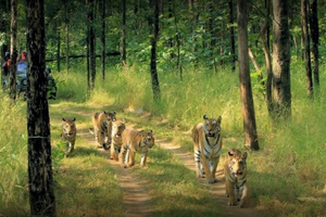Pench National Park near Dhuandhar Waterfall