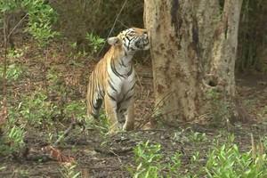 Tadoba-Andhari-Tiger-Reserve76175.jpg