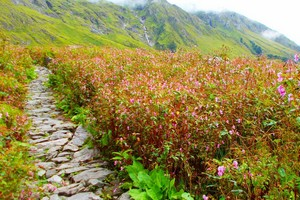 Valley of Flowers National Park near Nainital