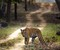 Top Wildlife Sanctuaries in Uttar Pradesh
