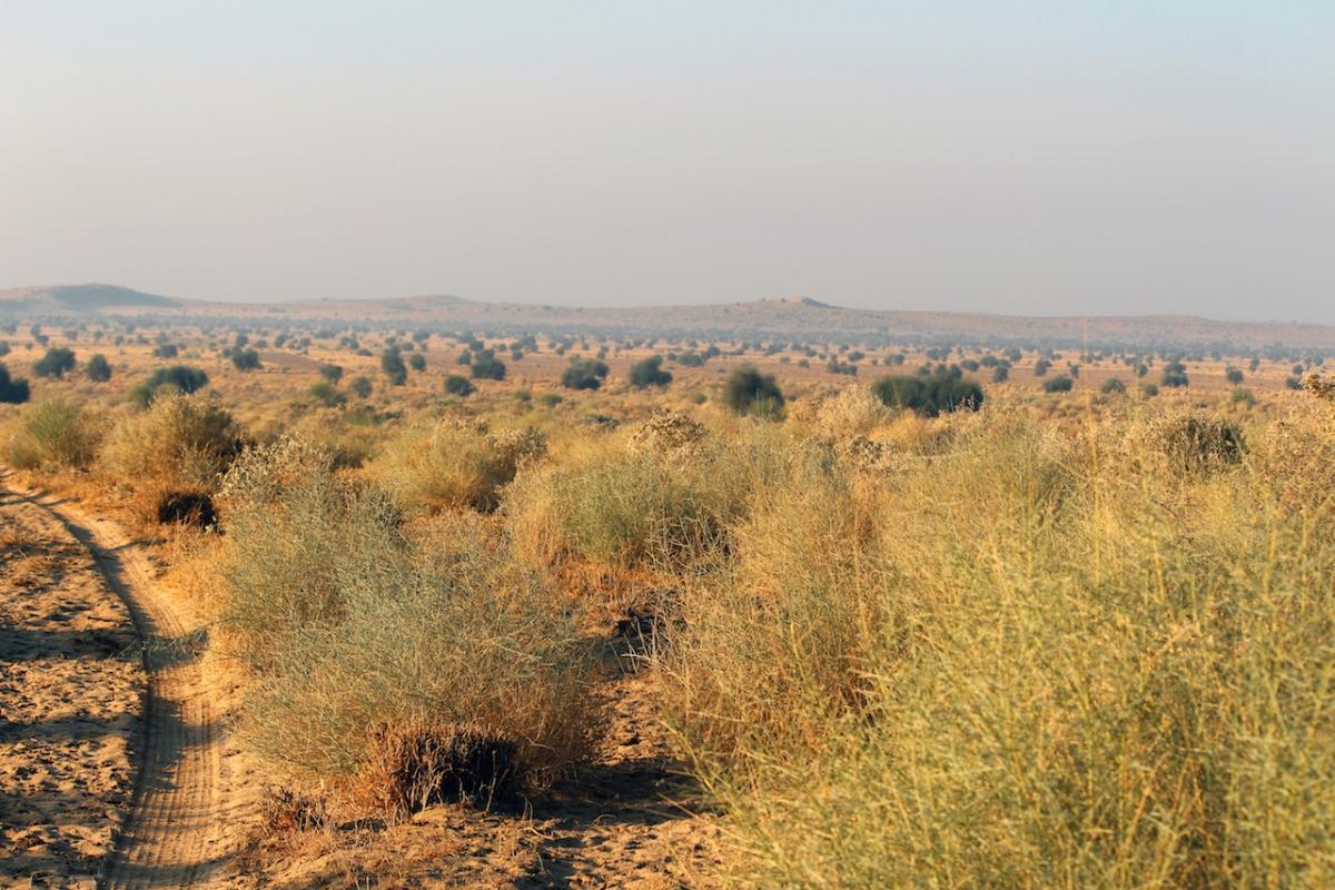 Desert National Park, DNP