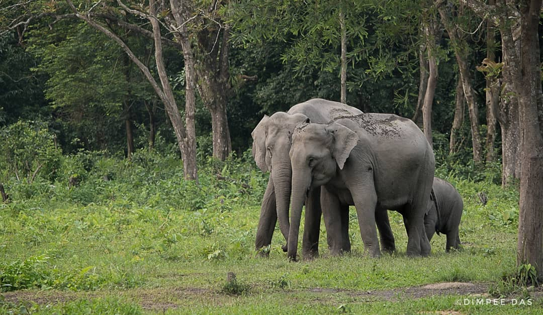 Manas National Park, Manas Wildlife Sanctuary